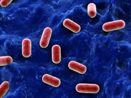 Lactobacillus acidophilus - Bild: Crestock.com
