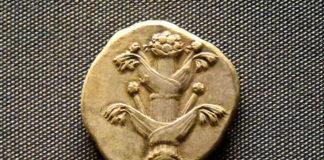 Silphium avbildat på ett mynt från 435-375 BCE (Before Common Era) - Foto: Osama Shukir Muhammed Amin