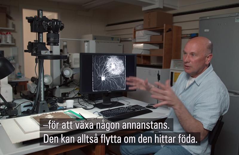 Cellbiologen Mark Fricker berättar om svamparnas mycelsystem