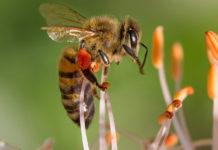Bisamhällen gagnas av svamparnas antivirala egenskaper. Foto: AdobeStock.com