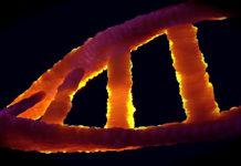 Epigenetik och DNA. Bild: Colin Behrens. Licens: CC0, Pixabay.com