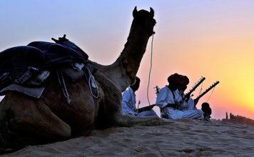 Kameler i Afrika - Adobe Stock
