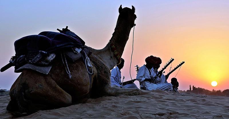 Kameler i Afrika användes för att bota dysenteri - Adobe Stock