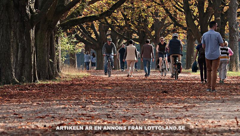 Låt en promenad ge dig en skön söndag. Foto: Silvia & Frank, Pixabay-licens.