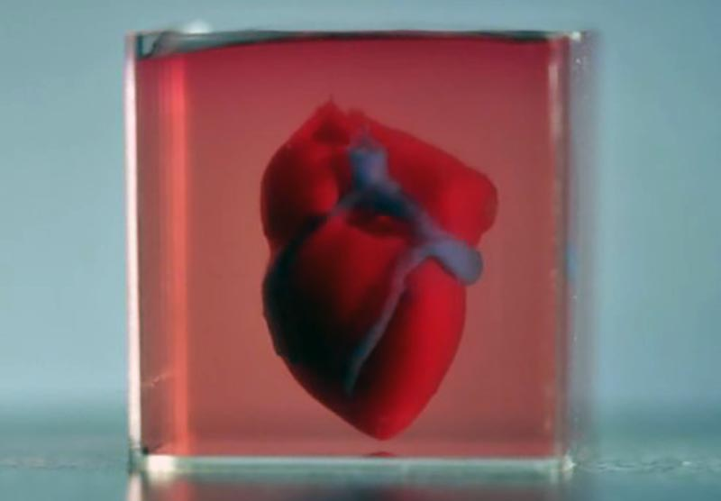 Printed 3D-heart. Image credit: AdvancedScience.com