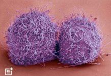 Candida auris. Foto: Healthunits.com