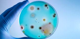 En så kallad petriskål används för att odla bakterier. Foto: AdobeStock.com