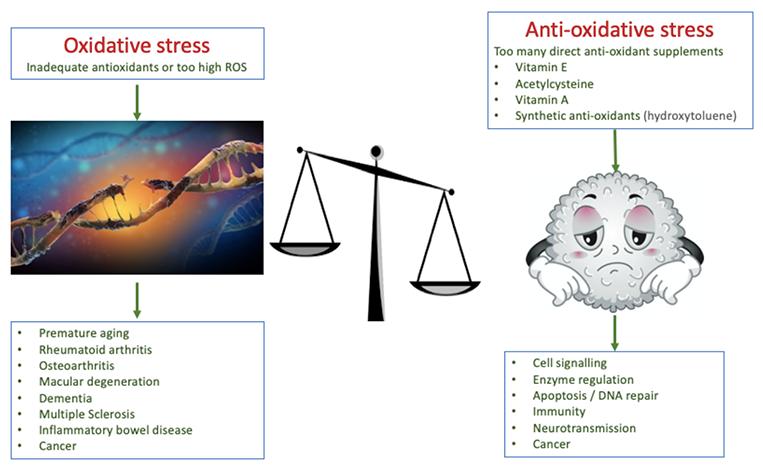 oxidativ stress träning