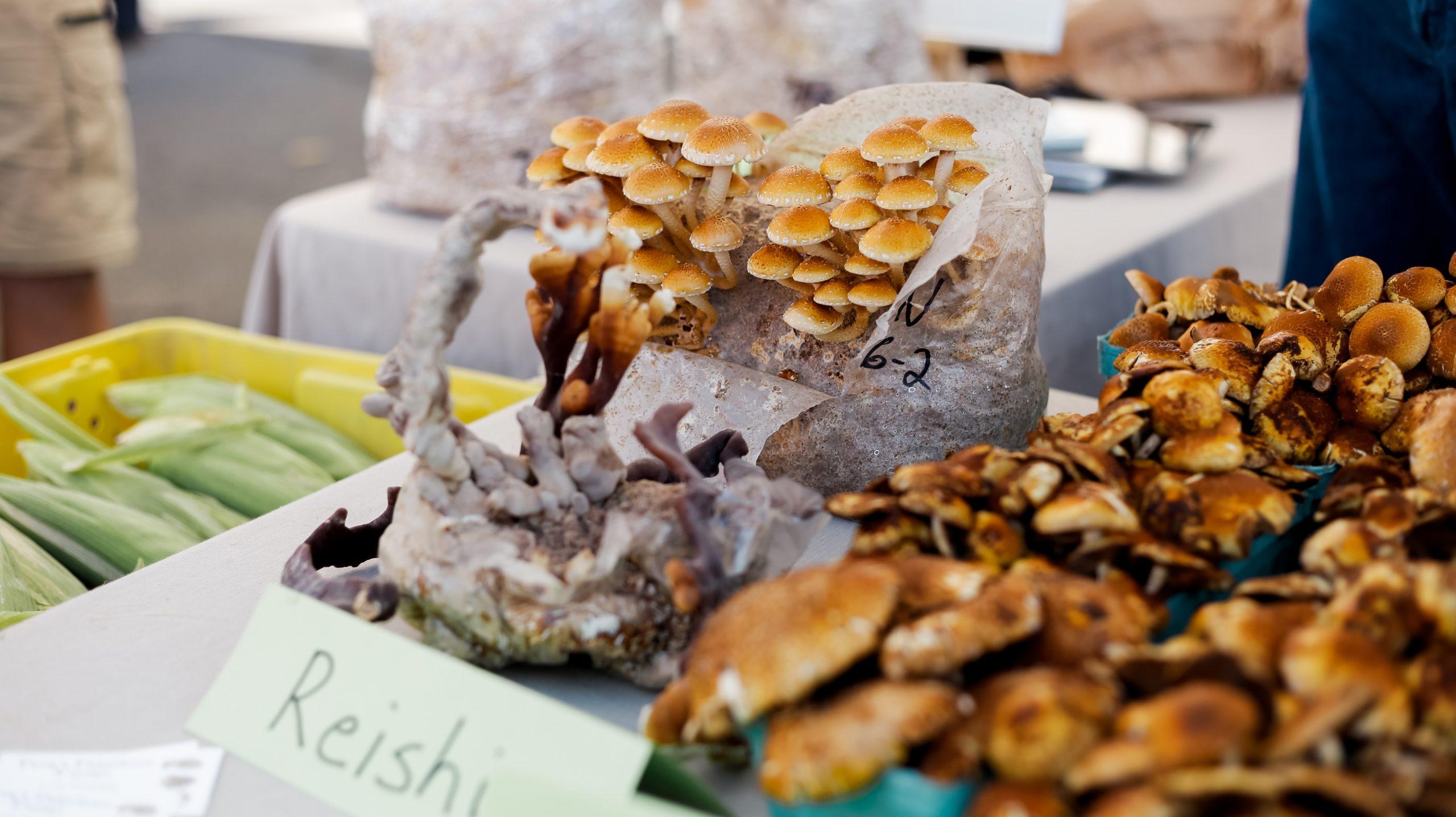 Reishi för bättre koncentration och minne. Foto: Allie Licens: Unsplash.com