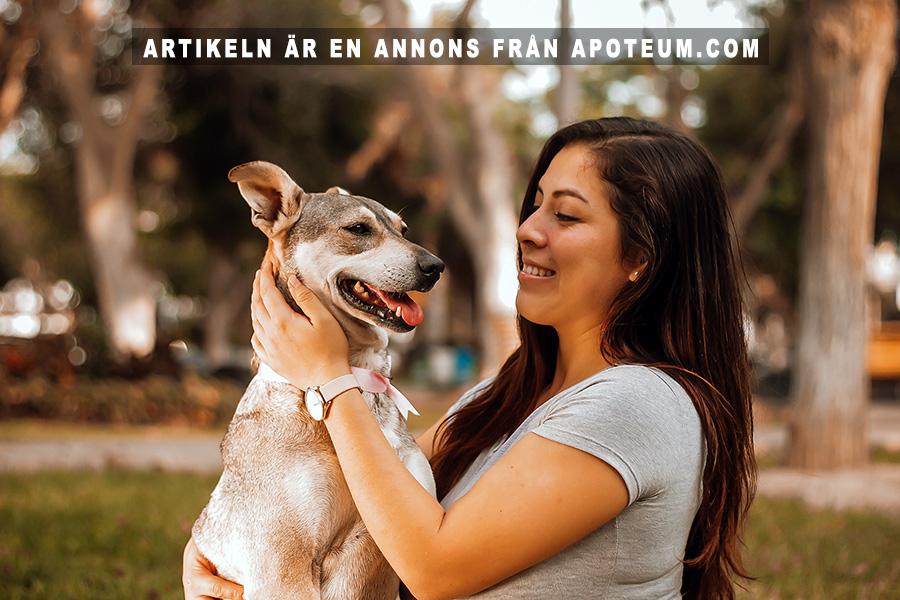CBD olja för husdjur . Foto: Manuel Meza. Licens: Unsplash.com
